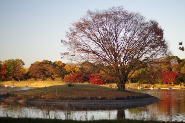 秋分の日01