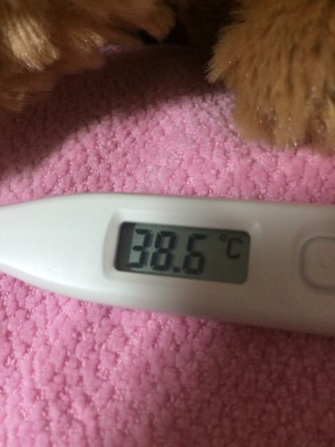 インフルエンザ熱02