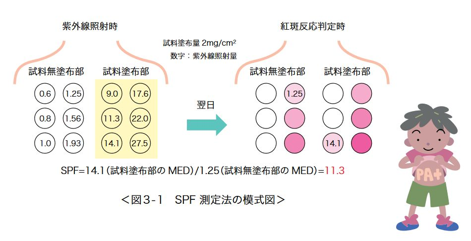 SPF 測定法の模式図