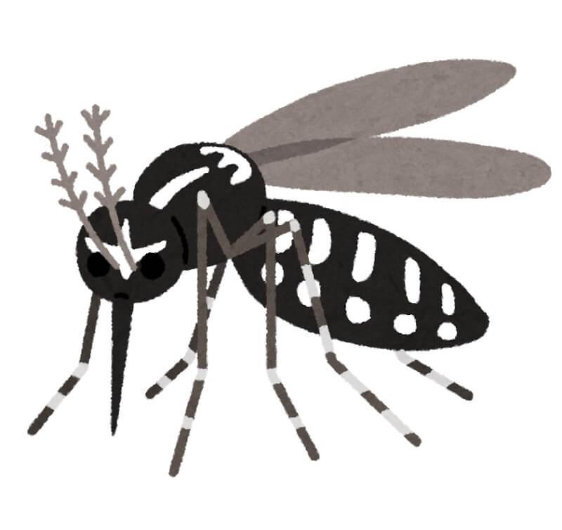 蚊 飛行高度