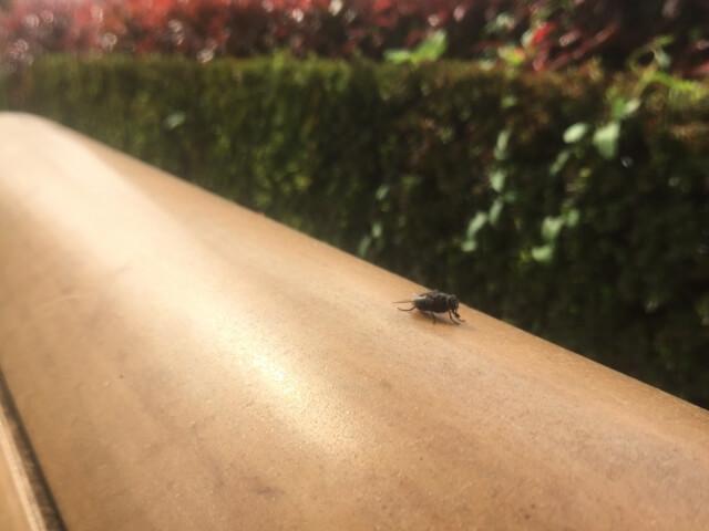 蚊取り線香 コバエ
