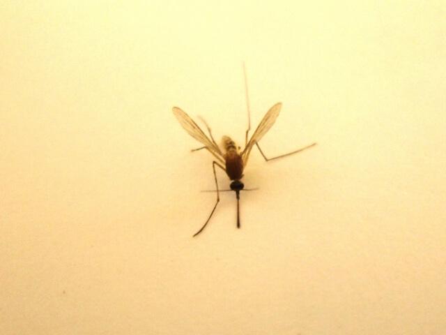 蚊 どこから生まれる