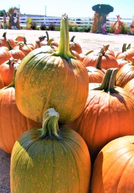 ハロウィン かぼちゃ どこで売ってる